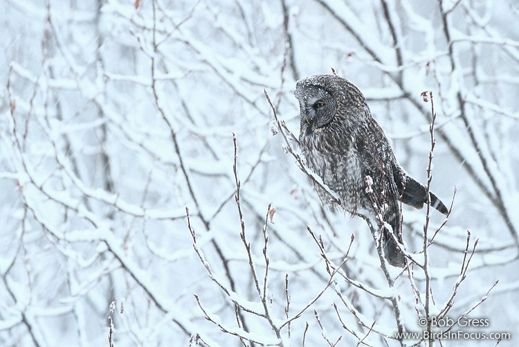 Return to Last Page
