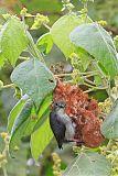 Mistletoebirdborder=